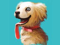 different eyes dog