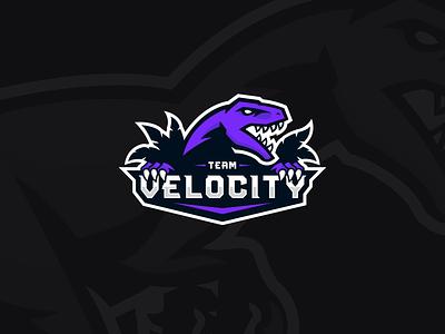 Raptor Logo Variants badge mascotlogo mascot logo mascot design mascot gaming logo gaminglogo gaming esports mascot esports logo esportslogo esport logo esportlogo esports esport dinosaur dino branding brand identity brand design