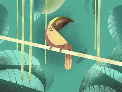 Illustration - Hornbill ui design bird illustration illustration art nature illustration nature art illustration