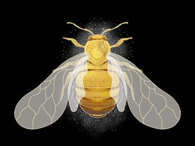 Illustration - Bee nature art insect bee illustration art illustration illustrator
