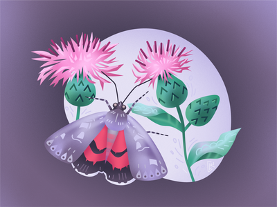 "Vector illustration ""A brown knapweed and a red underwing"""
