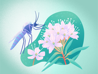 "Vector illustration ""A rosemary and a mosquito"""