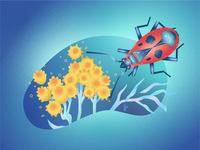 "Vector illustration ""A strawflower and a firebug"""