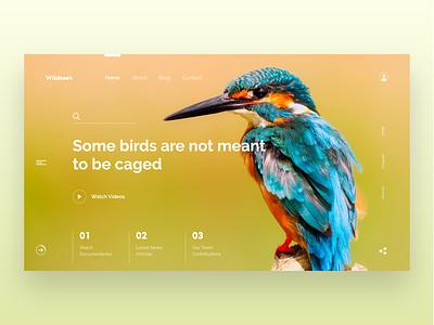 Wildnest Webpage Concept blog design web design design blog bird photography logo clean interaction design uxui website landing page