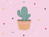 Hello Cactus