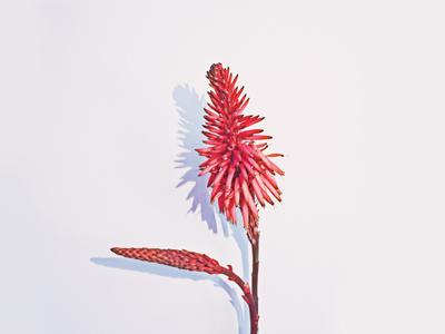 Odd Flower | 2