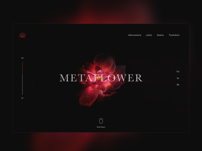 ▲ Metaflower ▲ flower webdesig landing page ux ux ui design ui user interface