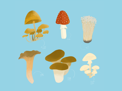 Mushroom Culinary Illustration procreate graphic design illustration design