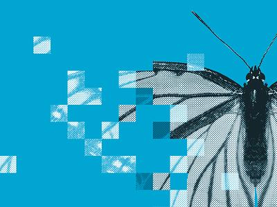 Digital Transformation butterfly digital editorial graphic design illustration manipulation pdf photo photoshop savvy print linkedin transformation