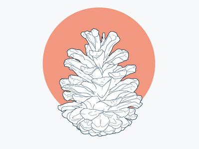 pine cone design cedar cone outline pine cone botanica line art flat icon vector logo illustration