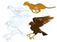 Cheetah Hawk Examples