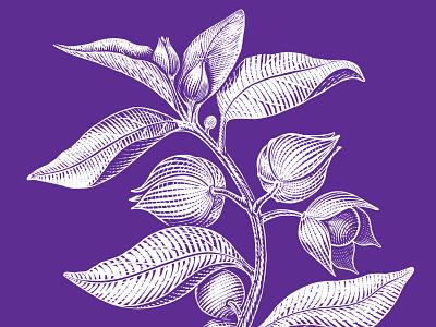 Packaging Illustration for a herbal medicine medicine herb vector illustration packaging