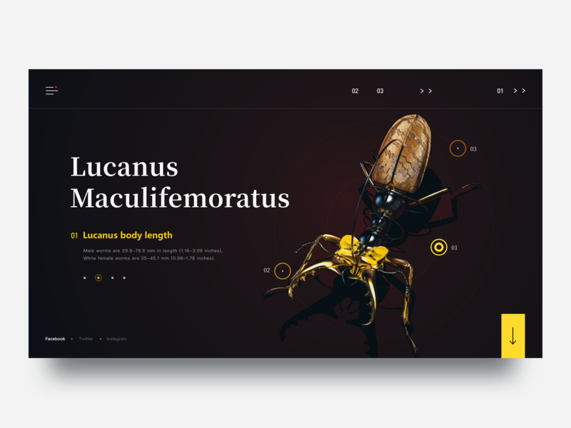 Insect Records-Lucanus  Maculifemoratus animal lucanus  maculifemoratus insect records web ux ui