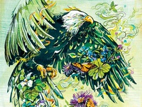 The Return of Bald Eagles