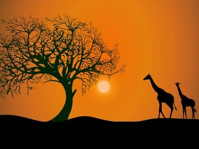Illustrator Giraffe