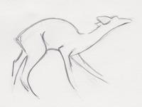 Deer Sketch for Logo