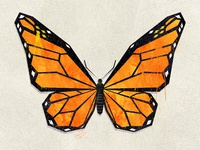 Lepidopterology - Monarch