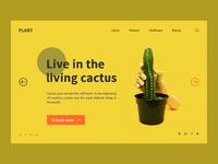 Cactus format 2
