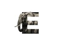 """""""E"""" Letter Portrait"""