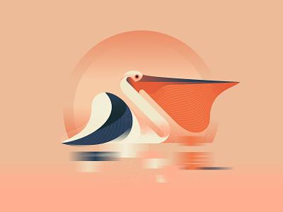 Pelican design character vector art illustrator illustration pelican