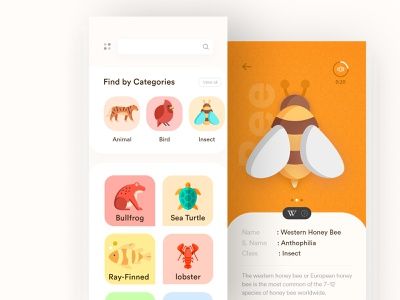 Wildlife App Concept ux typography vector flat illustration user experience minimal flat  design andorid ios app design wild animal