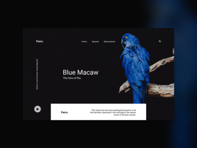 Macaw UI