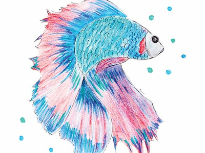 Fish pencil drawing hand drawing water color pencil illustration copic marker