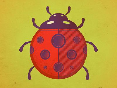 Ladybug ladybug ladybird bug insect critter spring summer