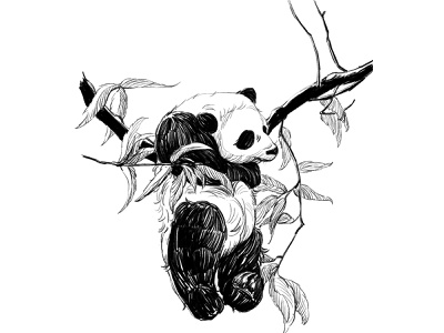 Panda illustration painting