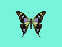 GRAPHIUM WEISKEI ARFAKENSIS - Flies Files Project - #002