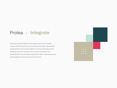 Feature Illustration - Protea Networks simple geometrical branding typography illustration digital branding