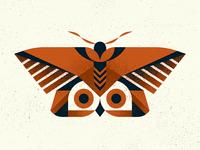 """Owl"" Moth"