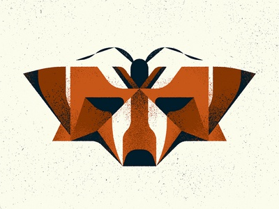 """Fox"" Moth"