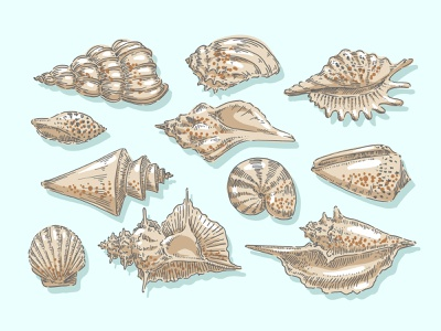 Seashells summer marine illustration water vintage seashell oyster spiral wildlife reef snail coast scallop cockleshell ocean nautical shellfish mollusk sea shell
