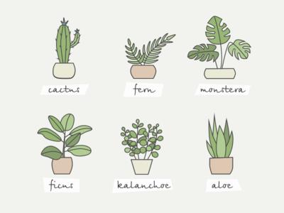 Home plants illustration icon aloe ficus fern cactus plant