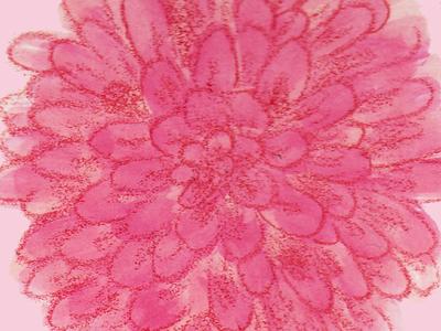 Analog Pom pencil watercolor dahlia flower pink floral flora