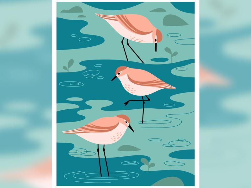 Waders illustration art women who draw wmbd2019 vector art illustrator wildlife environment sandpipers birds migration worldmigratorybirdday illustration