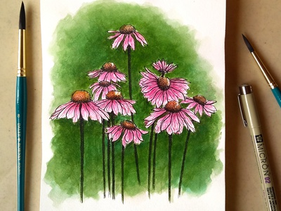 Coneflowers | Watercolour Illustrations floral design floralstudy watercolor traditional art visual design design graphicdesign illustration