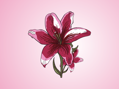 Lily Flower Inky Illustration stylus surface pen vector illustration vector art lineart outline ink illustration vector design digitalart illustrator adobeillustator floral art flowerillustration botanical illustration botanical digital flower lily