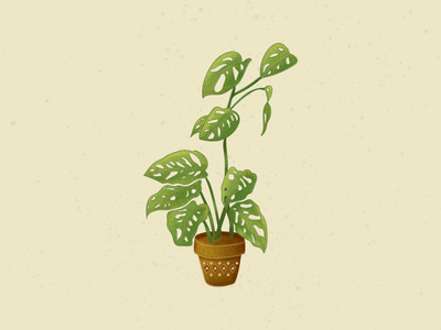 Monstera Illustration adobe illustrator adobe photoshop illustrator illustraion digital illustration digital art digitalart digital plant illustration botanical illustration botanical nature leaves green plants swisscheeseplant monstera