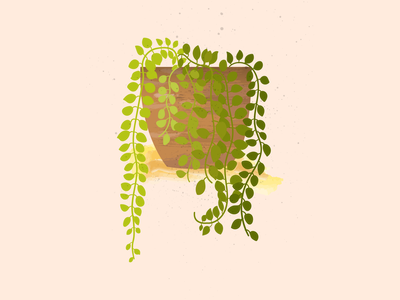 Dischidia Illustration nature illustration nature indoorsplant pot green plantsillustration plants dischidia adobe illustrator surface pen illustrator illustraion digital illustration digital art digitalart botanical illustration botanical adobe photoshop digital