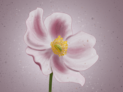 Japanese Anemone Illustration illustrator anemone delicate pink botanical illustration botanical adobe photoshop illustration digital illustration digitalart digital art digital floralillustration floral flower illustration flower japanese anemone
