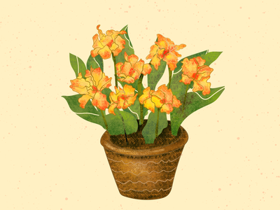 Canna Illustration texture brush pot nature green plant illustration plants canna adobe illustrator flowerillustration illustraion botanical illustration botanical digital illustration digital art digitalart adobe photoshop digital