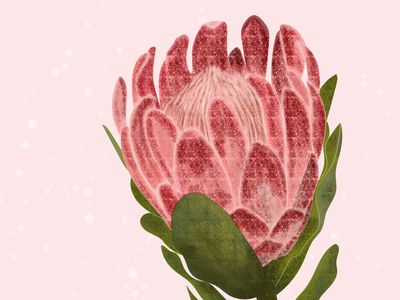 Protea Illustration digital painting digital drawing drawing brush texture protea leaves floral illustration floral art floral flowerillustration flower illustraion botanical illustration botanical digital illustration digital art digitalart adobe photoshop digital