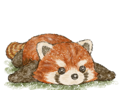 Red panda in prone position character cute zoo animals red panda illustration