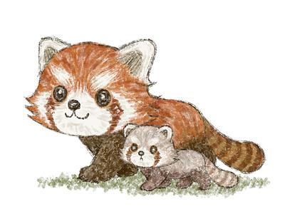 Red panda family walking illustration character animals panda red panda