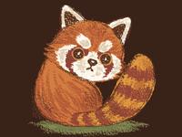 Red Panda Look Back