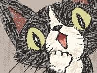 Surprised black cat
