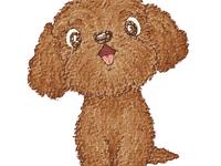 Toy Poodle Happy