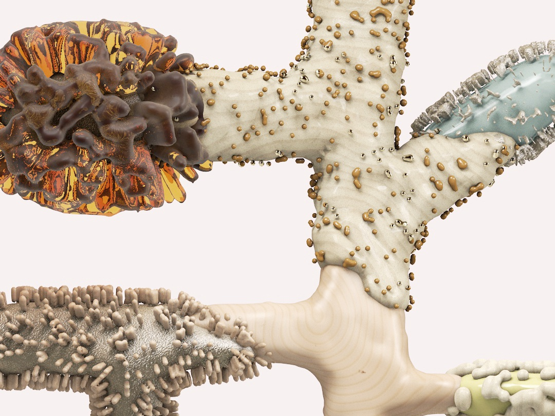 Amber Pine amber needletree conifers plantasia design poster motiongraphics xparticles plants nature illustration herbarium cinema4d 3ddesign